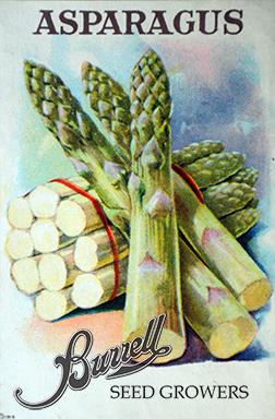 Asparagus Pkt