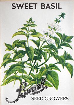 Heirloom Italian Basil Seeds