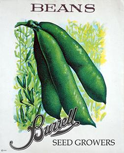 Beans Fava