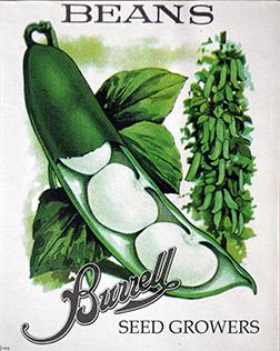 Beans Lima