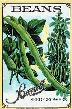 Beans Pole