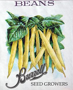 Beans Wax 3