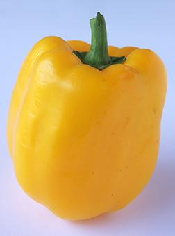 Bell Pepper, yellow