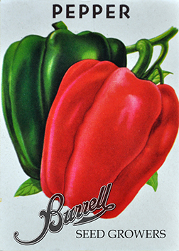 Heirloom Bell Pepper Seeds