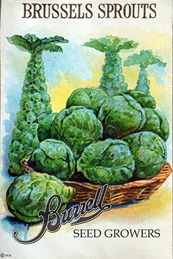 Long Island Brussels Sprouts Seed