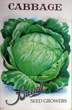 Heirloom Cabbage Seeds