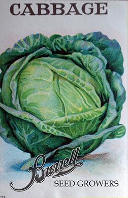 Cabbage 3