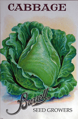 Early Jersey Wakefield Cabbage Seeds