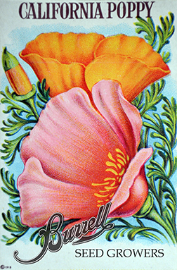 Heirloom California Poppy Seeds