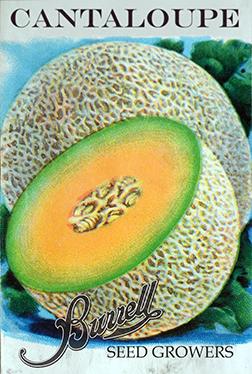 Cantaloupe 3