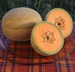 Cantaloupe Sawatch?