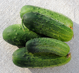 Carolina Cucumber Seeds