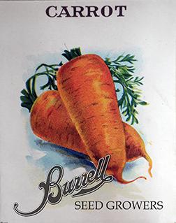 Carrot Chantenay