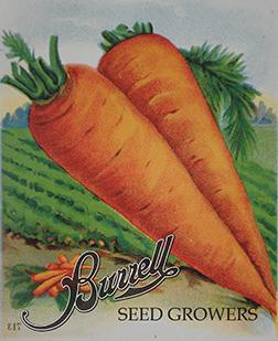 Carrots Antique 2