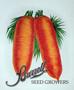 Carrots Danvers