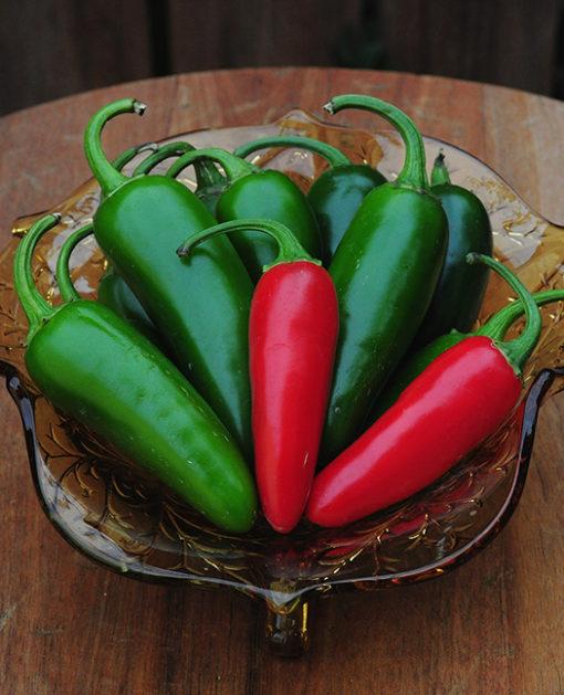 Chili Jalapeno M Pepper Seeds