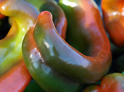 Chili Pepper 2