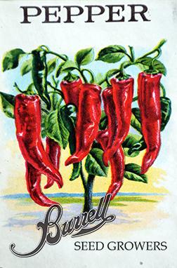 Chili Pepper Pkt