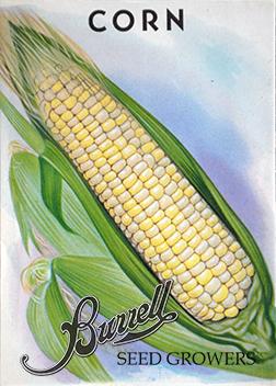Corn Bi-Color
