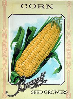 Heirloom Sweet Corn Seeds