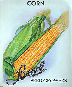 Heirloom Sweet Corn Seed