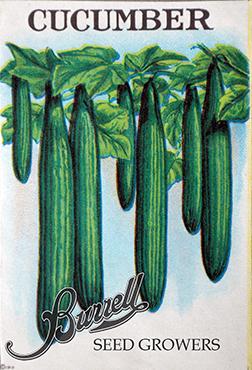 Cucumber Grn Dragon