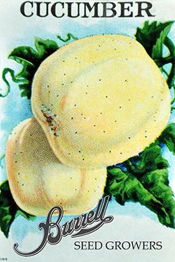 Cucumber, Lemon