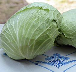 Early Flat Dutch Cabbage Seeds