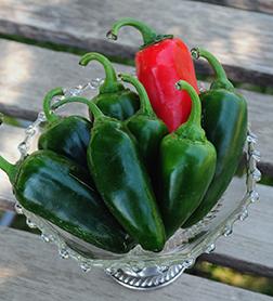 Early Jalapeño Pepper seeds