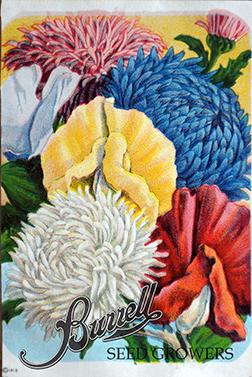 Flower Mix 1