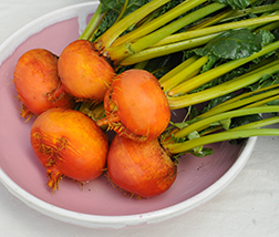 Golden Detroit Beets