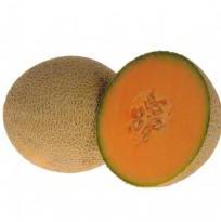 Holbrook cantaloupe