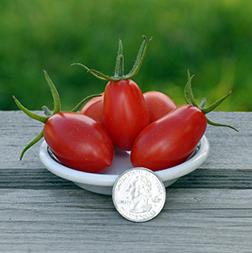 Jelly Bean Tomato Seeds