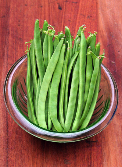 Kentucky Wonder Pole Bean Seeds