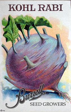 Heirloom Purple Vienna Kolhrabi Seeds