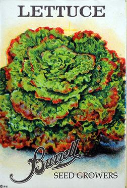Lettuce Leaf red