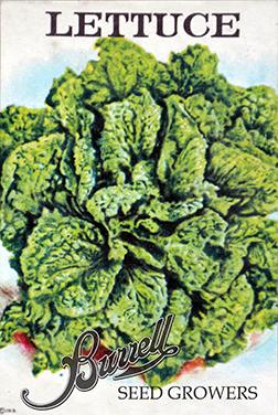 Lettuce leaf 3
