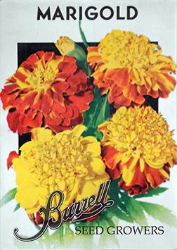Marigold Mix 2