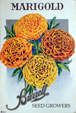 Heirloom Marigold Seeds