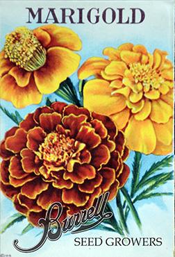 Marigolds Mix