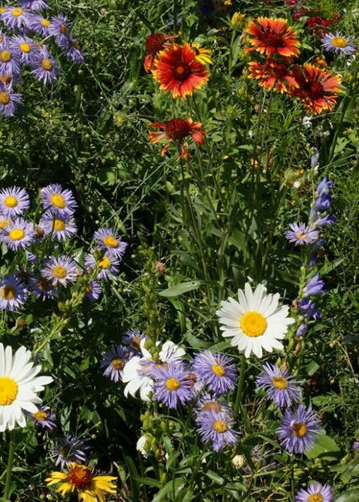 Mountain Wildflower Mix Seeds