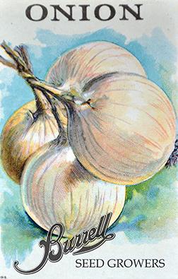 Heirloom White Onion Seeds
