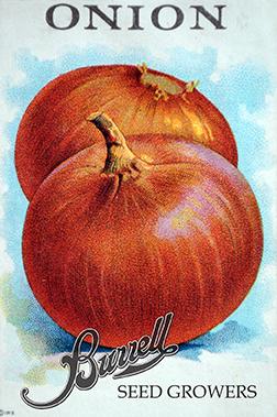 Heirloom Yellow Onion Seeds