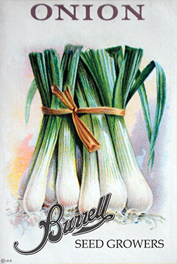 Green Onion Seeds, Bunching Onion Seeds