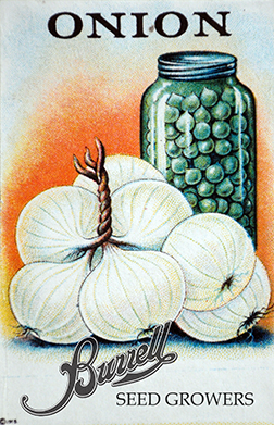 Pearl Onion Seeds