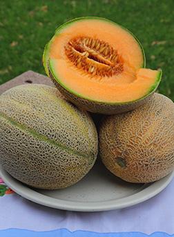 PMR #45 Cantaloupe seeds