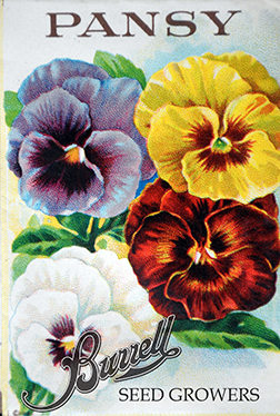 Heirloom Pansy Seeds