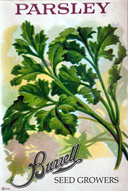 Heirloom Italian Parsley Seeds