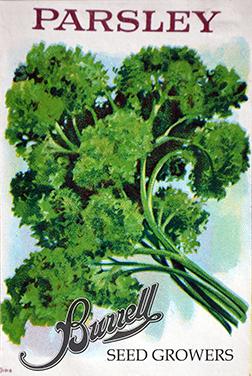 Heirloom Parsley Seeds