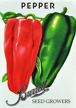 Peppers Marconi